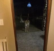 Male deer saying hello outside